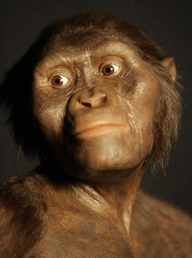"""Trodimenzionalni model """"Lucy,"""" hominida od prije 3,2 milijuna godina."""