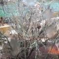 ledene sige na drveću, Florida