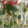 zaleđena Florida u jeku globalnog zatopljenja