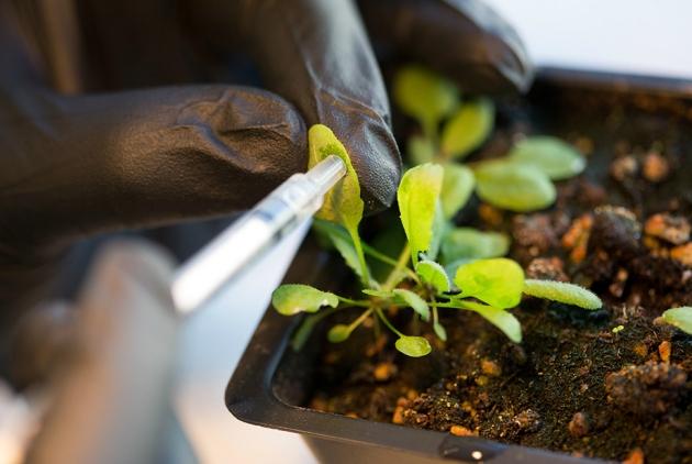 Jednostavno umetanje nanotuba u biljku.