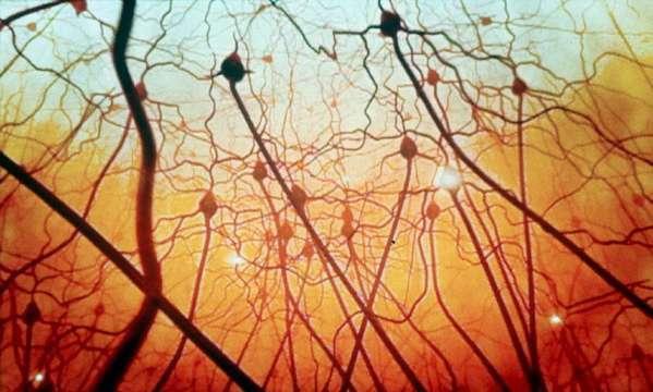 Šuma Striborova - na slici vidite neurone - moždane stanice, koje nalikuju na elegantna stabla, neuroni ne bi mogli djelovati bez acetilkolina neurotransmitera uz koje prenose informacije.