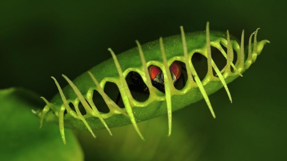 Biljke posjeduju sva osjetila kao i ljudi   Matrix World