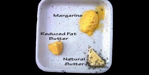 Ako je margarin toliko dobar i zdrav koliko nas uče mediji i liječnici, kako to da mravi nemaju želje niti da ga probaju, dok lude za maslacem?