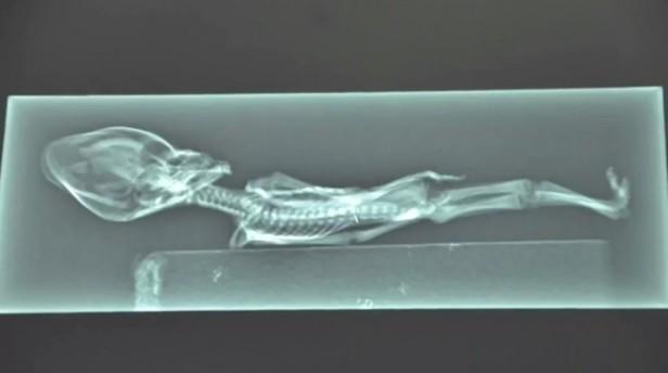 Izgleda li ovaj skelet ljudski?