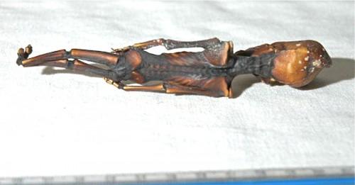 Neobični skelet iz pustinje  Atacama, bi trebao pripadati šestogodišnjoj ili osmogodišnjoj djevojčici.