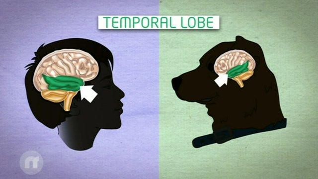 Glasovno područje kod pasa im pomaže da odrede u kakvom ste raspoloženju.