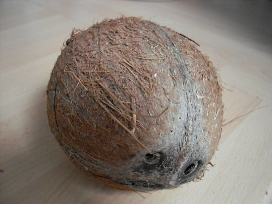 Izgled zdravog ploda kokosove palme.