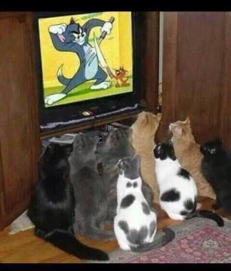Jesmo li mi nalik ovim mačkama, utječe li jeftina zabava na naše emocionalne i racionalne centre do tolike mjere, da ništa drugo ne vidimo?
