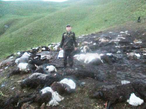 Policajac snimljen za vrijeme očevida usred sprženih ovaca. Ovaj slučaj iz Kirgizistana nije rijetkost, broj udara munja se povećava u zadnjih tri godine.