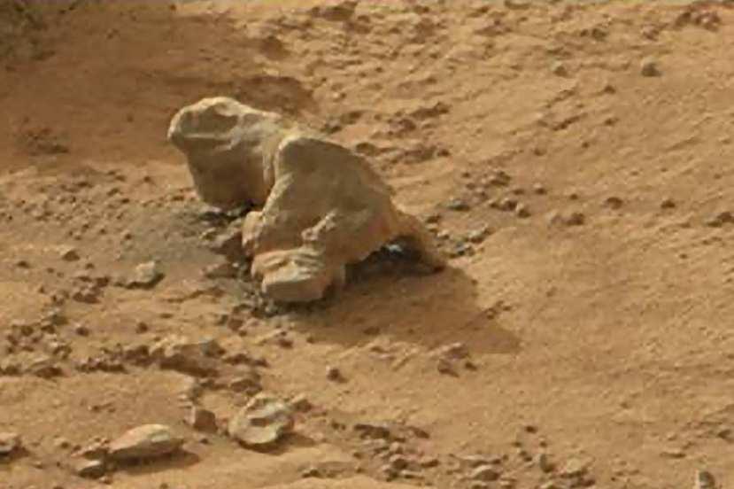 marsovska kamena iguana