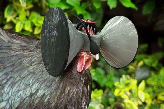Virtualni svijet za piletinu u kavezima, umjesto organskog i prirodnog uzgoja na otvorenom, je li znanost zaista poludjela?