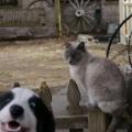što sve rade psi da mačkama upropaste portrete