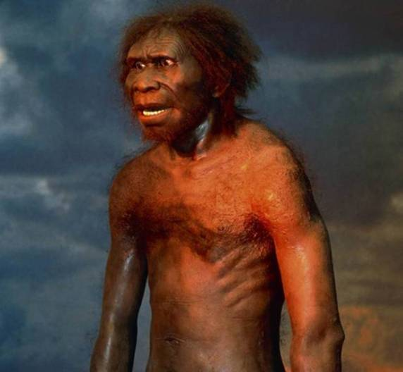 Hoće li genetika otksiti gdje i kada je nastao Homo Erectus?