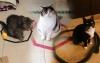 1 mačke u krugu