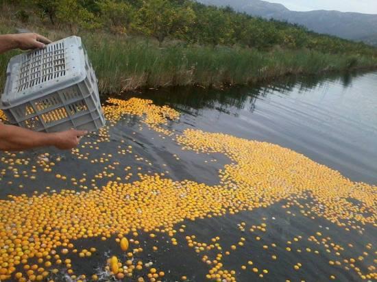 Zbog sankcija Rusiji, u dolini rijeke Neretve mandarine se bacaju u vodu, jer se nemaju kome prodati. Prirodni vitamin C nepovratno nestaje u vodama neretve kao i zarada seljaka koji jedino žive od uroda citrusa. nestaje li tako i zdavlje ljudi oboljelih od osteoporoze?
