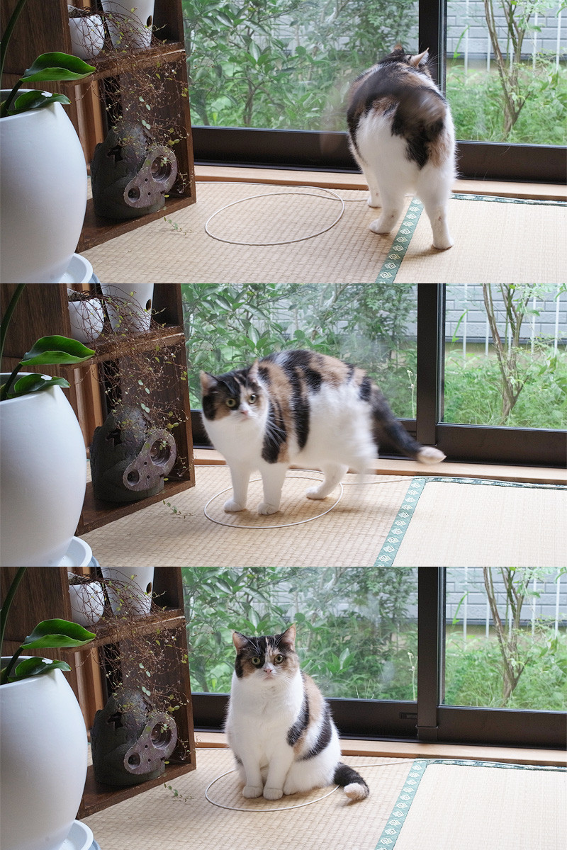Ljubav između mačaka i krugova je nevjerojatna.