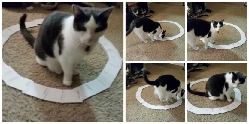 """Bez obzira kako """"sklonište"""" izgleda maca će se u njega smjestiti."""