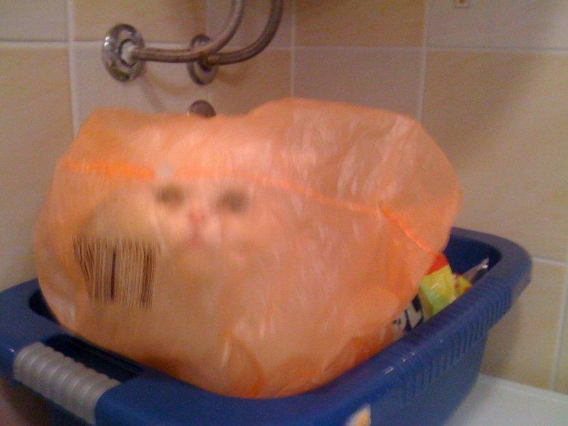 """Mačka Destiny u pokušaju skrivanja u plastičnoj vrećici. nema veze što je vrećica gotovo prozirna i što je mačka u pola minute bila mokra od kondenzacije, ipak je to """"odlično"""" mjesto za skrivanje."""