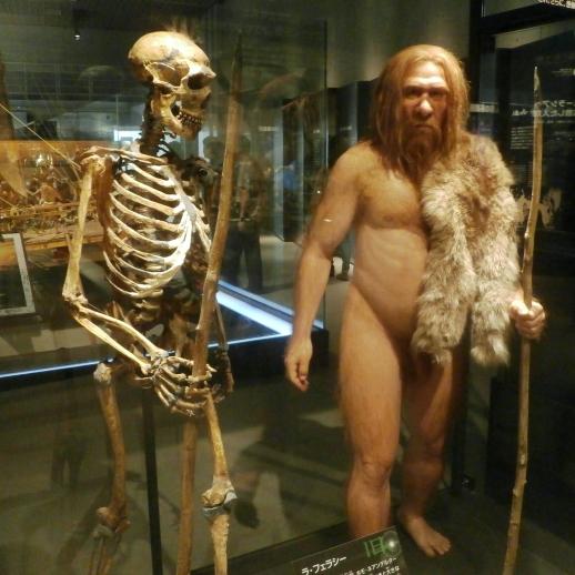 Iako nenadertalci imaju puno fizičke sličnosti s modernim ljudskim bićem oni nisu naši direktni preci.
