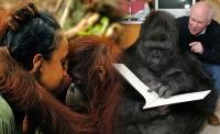 1 primati glavna