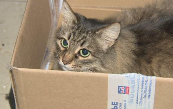 heroina Masha u kutijici u kojoj je grijala malenu bebu cijelu noć.