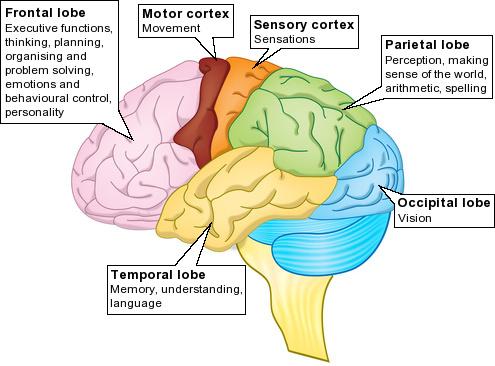 """Djeca koja su proživjela takva iskustva imaju manje """"sive tvari"""" u frontalnom korteksu i amigdala je hiperaktivna."""