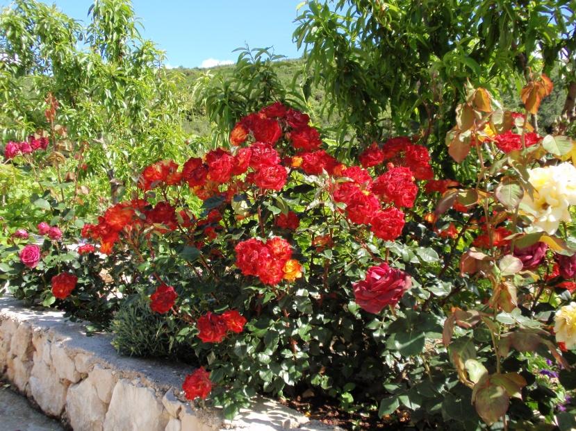 Malo domaćih ruža, par starih sorti bresaka i obične samonikle sorte vinove loze, sve to ćeuskoro postati ilegalna roba koju nećemo moći kultivirati.
