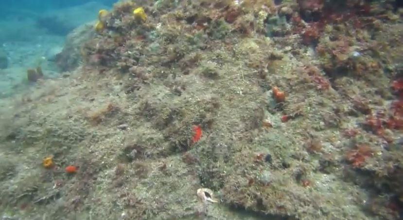 Možete i pronaći hobotnicu na slici?