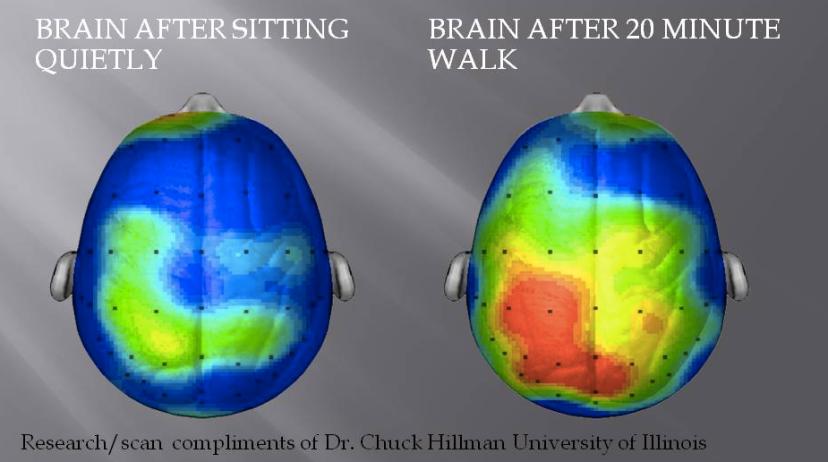 Nakon samo 20 minuta šetnje naš  mozak počinje raditi puno većom brzinom i efikasnošću.