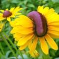 čudnovate mutacije cvijeća
