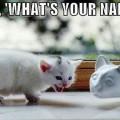 Heej! Tebi govorim, mačketino jedna!