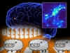 bežična kontrola mozga