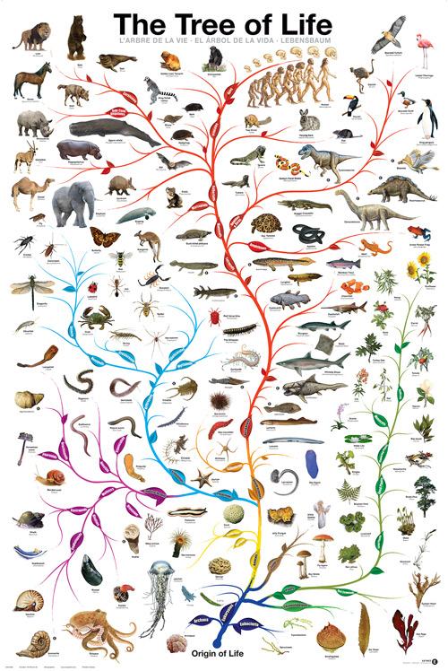 Drvo života od jednostavničnih organizama do ljudi - klasična predstava istog, no čini se da u biti stvar nije tako jednostavna, jer genetika pokazuje potpuno isprepletene naizgled nepovezane grane evolucije.