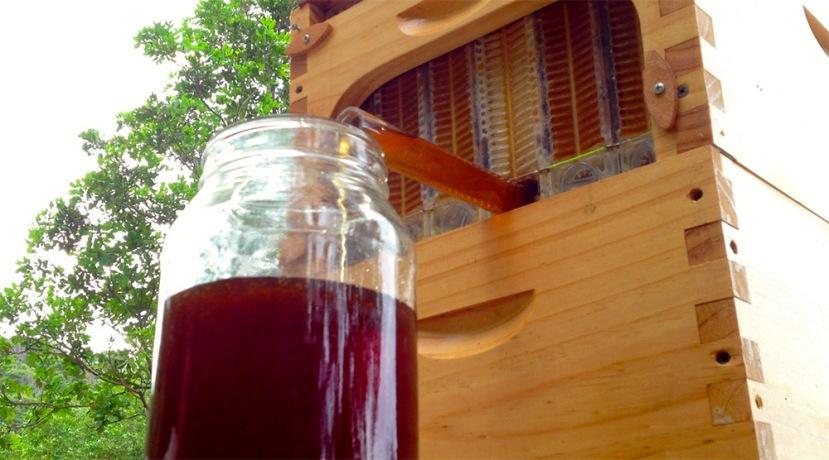 """Milenijima na gotovo istovjetan način """"krademo"""" med od pčela, s novom košnicom """"na slavinu"""" pčele gotovo niti ne opažaju izvlačenje meda."""