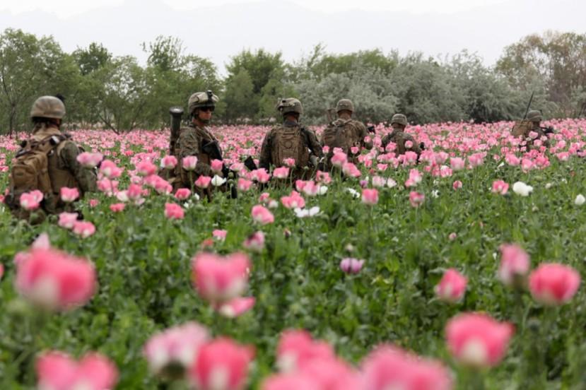 Američki vojnici čuvaju polja maka u Afganistanu, zahvaljujući kojem se u SAD-u proizvodi 98% medicinskog opijuma.