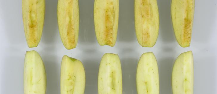 Na gornjem dijelu slike vidite normalne tradicionalne sorte jabuke, na donjem dijelu su Artičke GM jabuke koje nemaju enzim koji pokazuje da je jabuka bolesna ili povrjeđena.