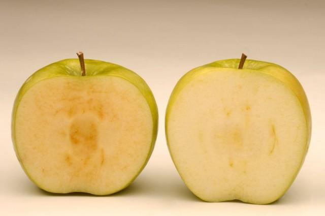 Uskoro GM jabuke na našem stolu, tek kad je presječenu ostavite na stolu, a ona ne potamni, znati ćete da ste kupili laboratorisjki proizvod, a ne djelo prirode.