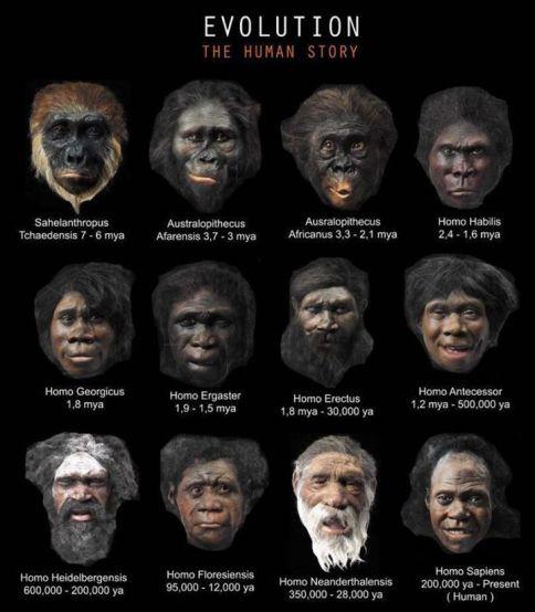 Ljudska evolucija po Darwinu ima više rupa nego li stvarnih i materijalnih dokaza, možemo li mi vjerovati paradigmama - nedokazanim znanstvenim teorijama ili je važnije da proučimo pravo stanje naših gena, čak i ako naša DNK krije genetiku biljaka i jednostaničnih organizama?