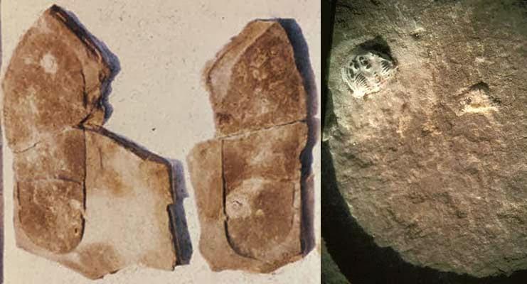 Kako objasniti fosilizirani otisak sandale i zgnječenog trilobita.