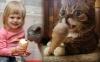 1 sladoled mačke