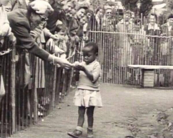 Bruxellski zoološki vrt tijekom 1958. godine, s ponisom prezentira svoj najvažniji životinjski izložak, živu afrikansku staru pet godina.
