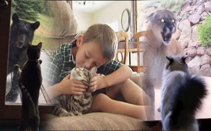 Hrabre kućne mačke tjeraju divlje pse, pume i medvjede od kuće