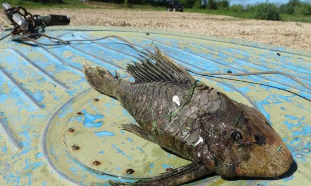 Nepoznata vrsta ribe uhvaćena u Rusiji