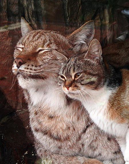 Neobični prijatelji u zoološkom vrtu.