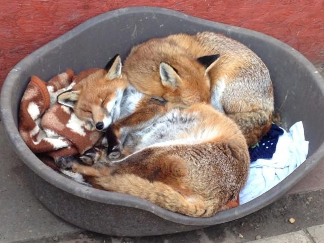Dawn i Dusk najviše vole spavati u svom krevetiću.