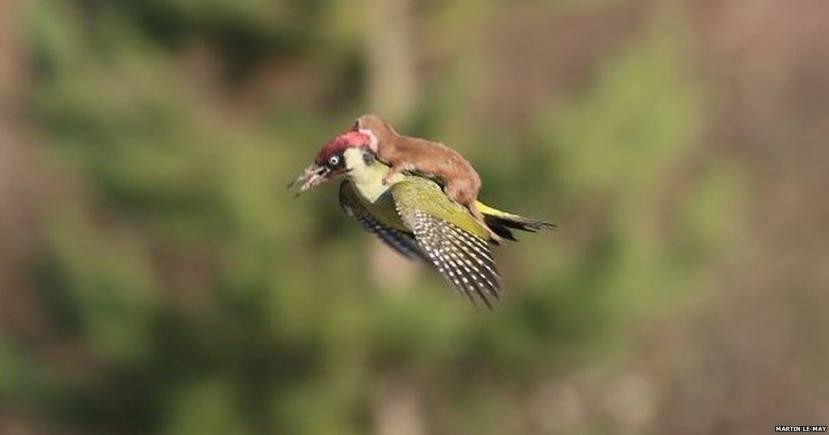 Nevjerojatna slika borbe za preživljavanje.