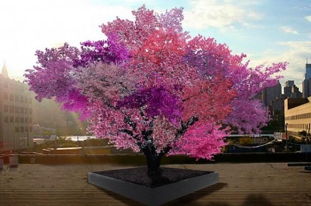 Kako izgleda drvo na kojemu raste 40 različitih vrsta voća?
