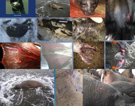 Radijacija nepovratno uništava morske sisavce, ribu i druge organizme u Pacifiku.