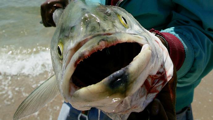 Riba ulovljena u prioblaju Kalifornije s jasnim lezijama i tumorima nastalima s velikim količinama radijacije koje su istjekle iz Fukushime.