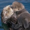 morski poljubac